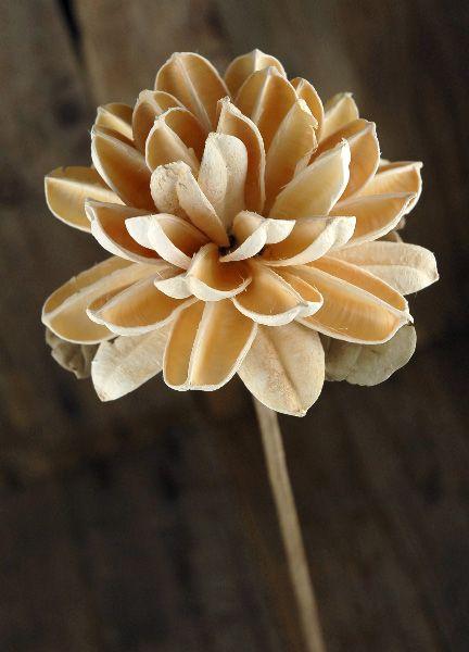 Botanicals, Lavender, Sola Flowers | Bride bouquets ...