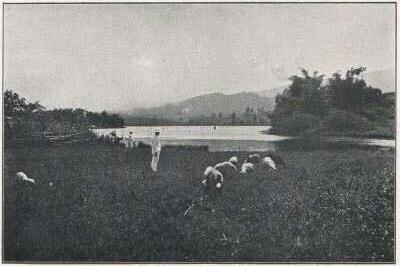 Lake Cilenca(Sitoe Tjileuntja)