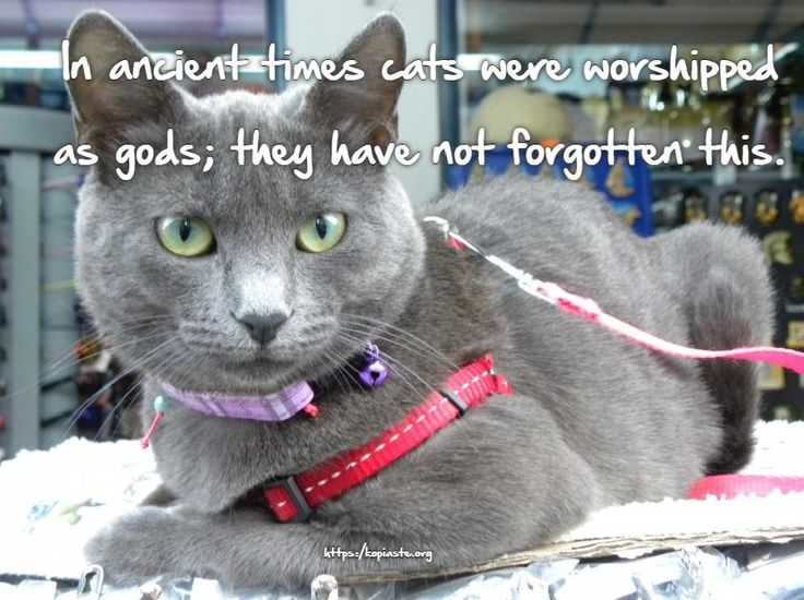 In ancient times cats were worshipped as gods; they have not forgotten this. Terry Pratchett #cats