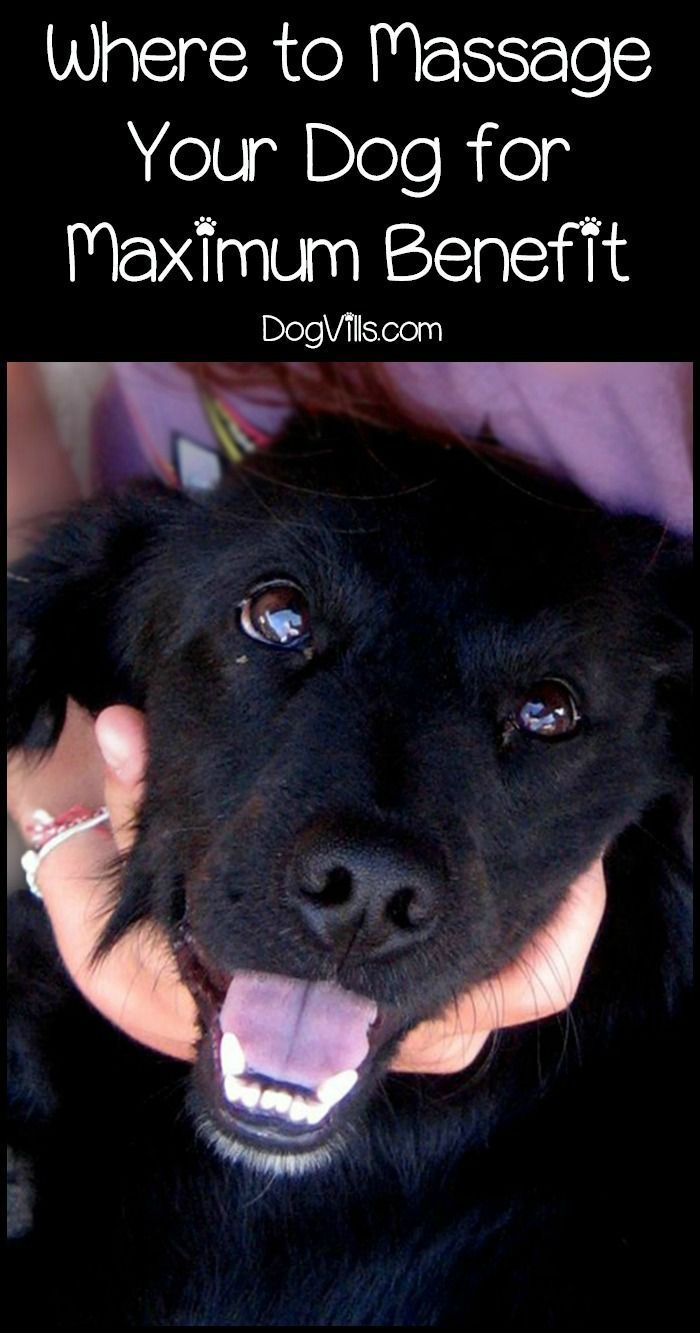 Massage For Dogs Where To Massage Them For The Most Benefits