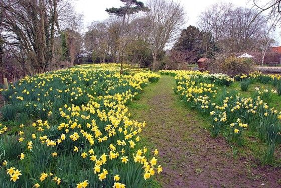 Mothering Sunday on the 30thMarch 2014 is the perfect time to treat your mother to a visit to the renowned gardens of Hindringham Hall open...
