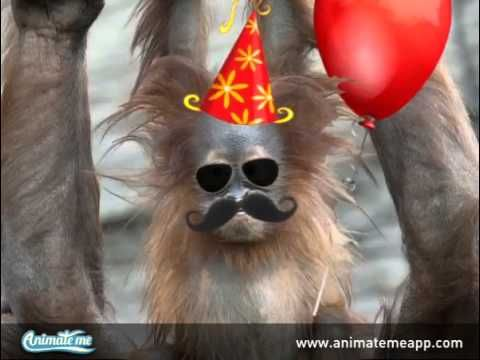 Talking Monkey Sings Happy Birthday!  Create your own talking pets, talking animals, and photo animations with the FREE Animate Me - Talking Photos app for iPhone and iPad. It won't be free for long, so download today! http://www.animatemeapp.com/get