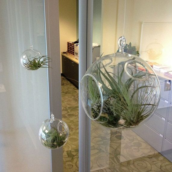 Unusual Air Plants - Home Decoration Inspiration Ideas and Gifts_20