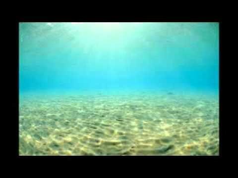 http://freedivingguide.com