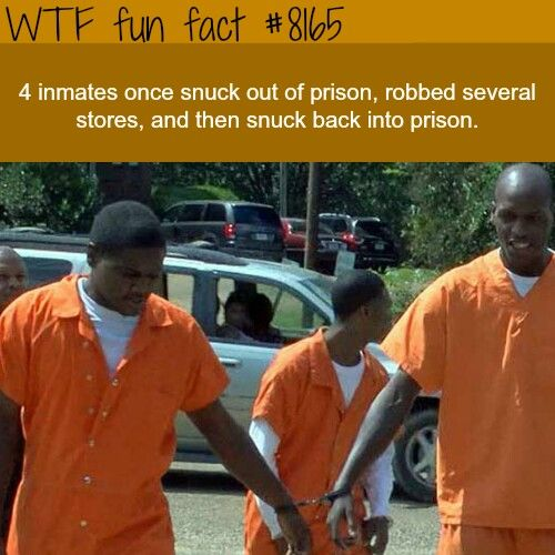 WTF Facts : follow for more funny, interesting & weird facts 😉 – Asila alkhatri
