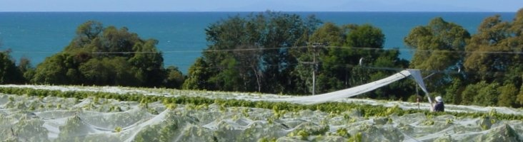 Kina Cliffs Vineyard has such a beautiful location by the sea!