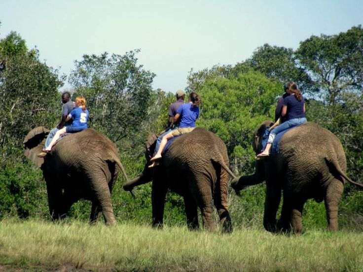 An Elephant Ride at the Elephant Sanctuary, The Crags - South Africa | Traveldudes.org