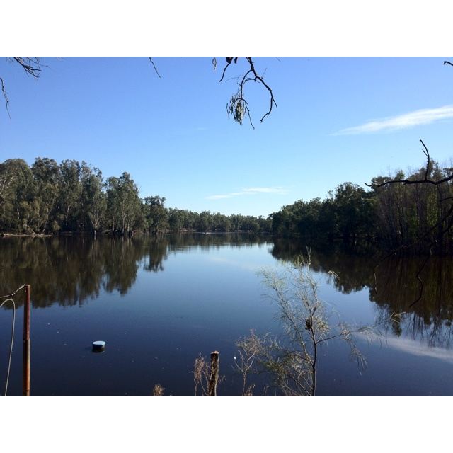 The Murray River near Swanhill