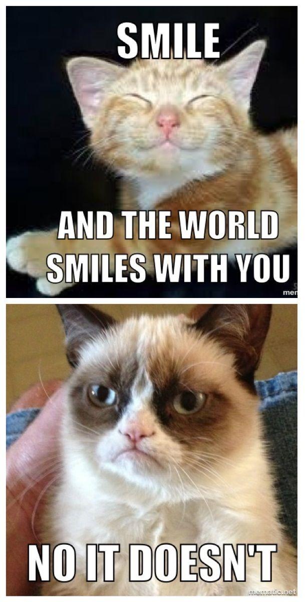 Oh Grumpy Cat #GrumpyCat #Meme | no no No No NO NO NO ...