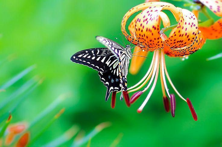 Fotózd Virág és pillangó Bruce Lee 500px