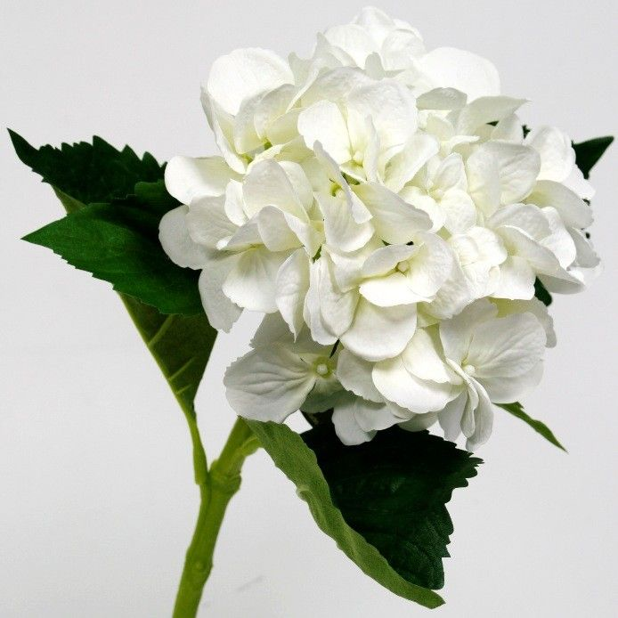 Waterstem Hydrangea White - A beautiful full looking Hydrangea in white. This flower has a waterproof stem that can be placed in a vase of fresh water for a more authentic look.