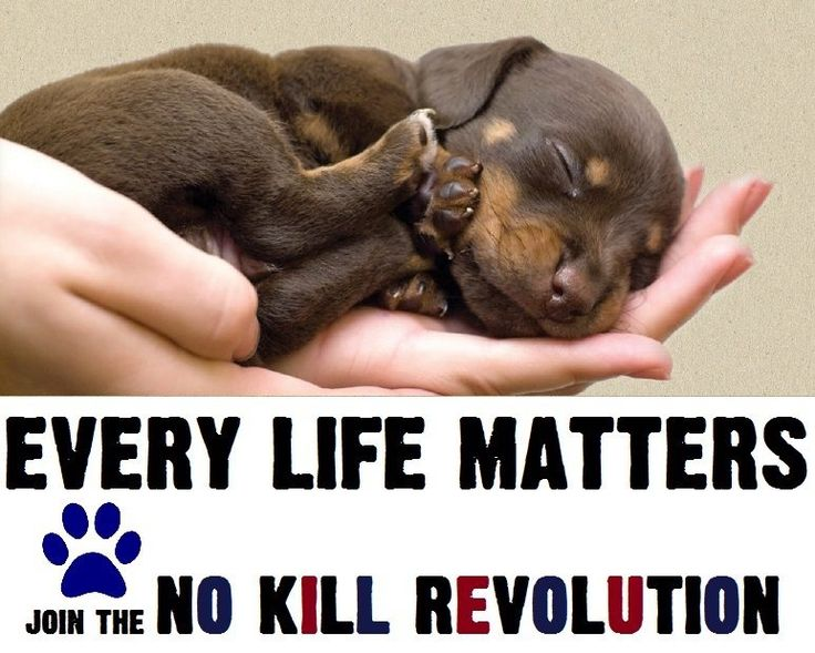 Are there any books about no kill shelters?