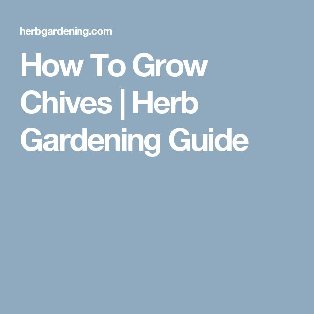 How To Grow Chives | Herb Gardening Guide