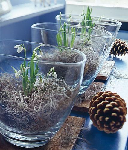 Schmuse-Feeling im Glashaus: Auf einem luftigen Polster sammeln sich die Schneeglöckchen als Blumendeko zum Sit-in.