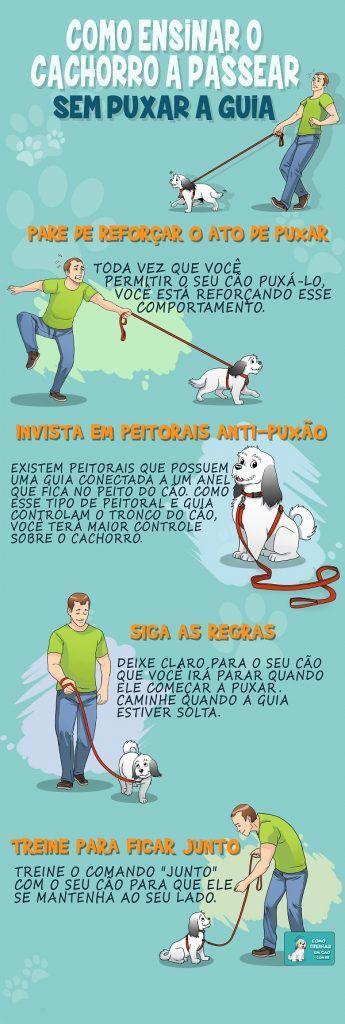 como ensinar o cachorro a passear sem puxar a guia infográfico