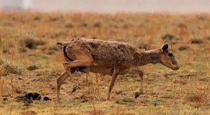 Putování s mamuty: Jejich společníci jsou mezi námi