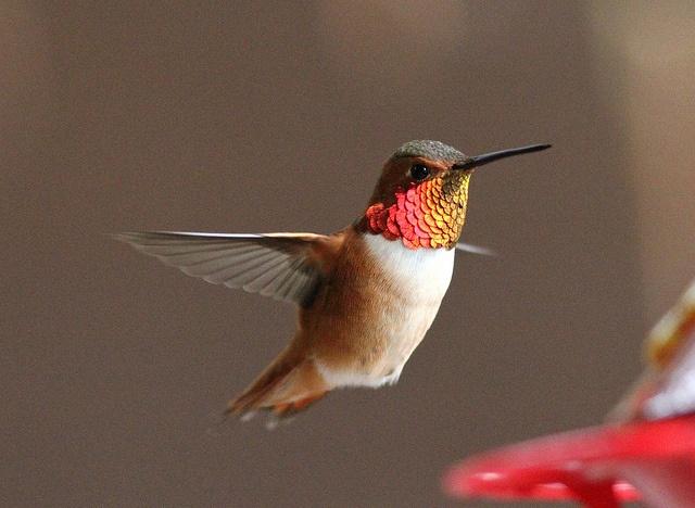 hummingbirds.: Favorite Birds, Watches Hummingbirds, Art Inspiration, Hummingbirds Lov, Art Hummingbirds, Hum Birds, Hummingbirds 3, Birds Birdwatching, Animal