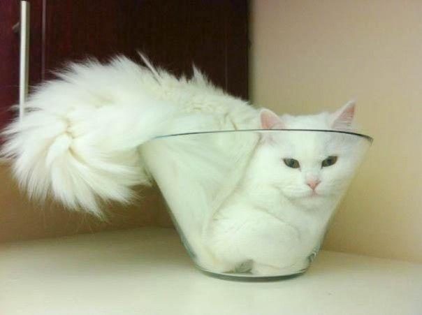 heeeee, serbime un gatito a la francesa