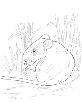 Desert Mouse Coloring Page From Mice Category. Select From 28458 Printable  Crafts Of Cartoons, Nature, Animals, Bible And Many More.