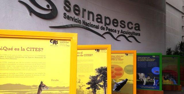 Exposición itinerante de CITES Chile estará abierta al público en Sernapesca.