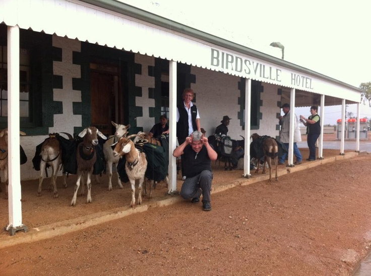 Birdsville Hotel / Australia's most legendary pub. / Who brings their goats to the pub?