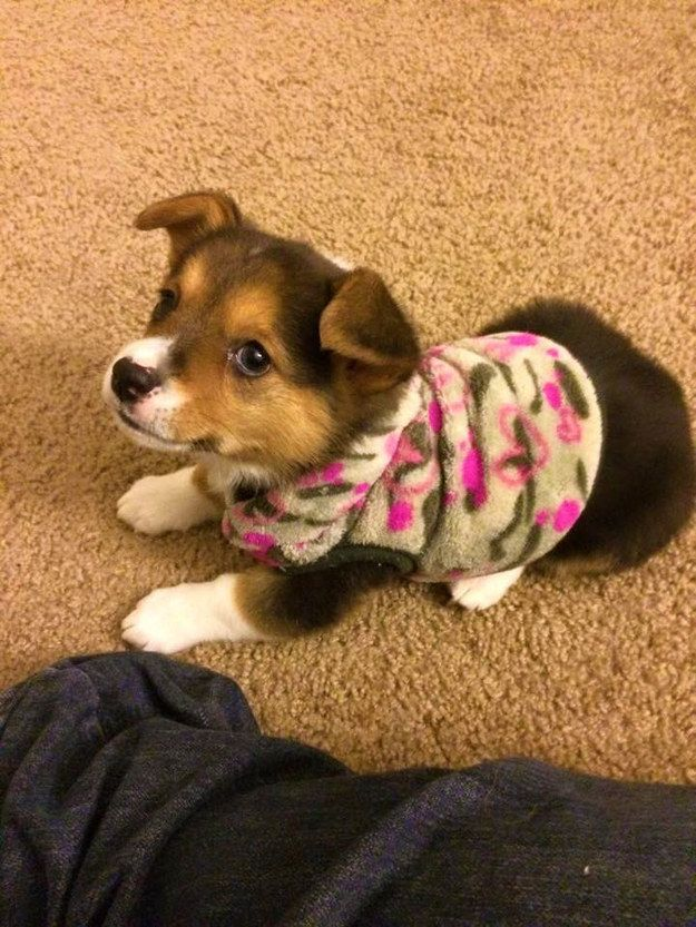38 Puppies For Anyone Who Needs A Smile – #27. And this little lady who thinks you should get in your pajamas and take a load off. http://www.pindoggy.com/pin/9593/