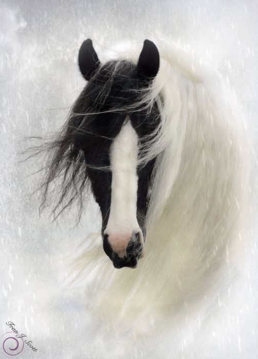 """Wisteria""  a  gorgeous horse  photo, by Fran J Scott: Equine, L'Wren Scott, Black And White, Art Prints, Black White, Beauty Creatures, White Horses, Hors Photography, Beauty Horses"