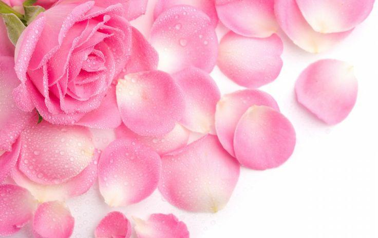 Hình nền những cánh hoa hồng