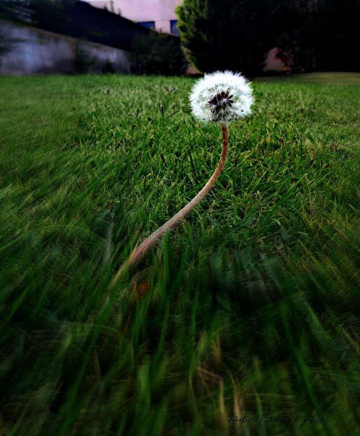 Fotografía: Flor