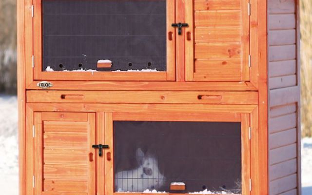 Cavia stanca della solita Gabbia? Ecco come fare Come noto, le Cavie sono animali che in natura vivono in piccoli branchi e per tanto se stiamo allevando delle Cavie è meglio che convivano nella stessa Gabbia almeno due esemplari. Oggi parliamo di  #cavia #gabbia #porcellino #india
