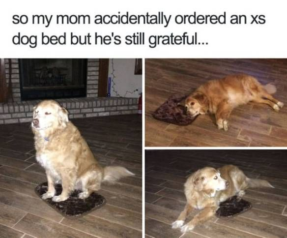 Funny Memes For Animals : Animal memes that will make you laugh harder than they probably