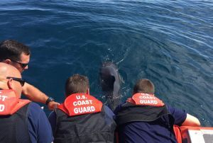 LOS ANGELES—The Coast Guard responded to an entangled dolphin Monday afternoon approximately 3 miles west of Channel Islands. At 12:37 p.m., watchstanders at Coast Guard Sector Los Angeles/Long Beach command center received a report from a Good Samaritan that a dolphin was seen entangled in fishing gear near Channel Islands. A rescue boatcrew from Coast…