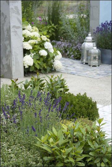 Kruiden in de tuin - kruiden voor de geur - kruiden die vlinders lokken - kruiden voor de keuken