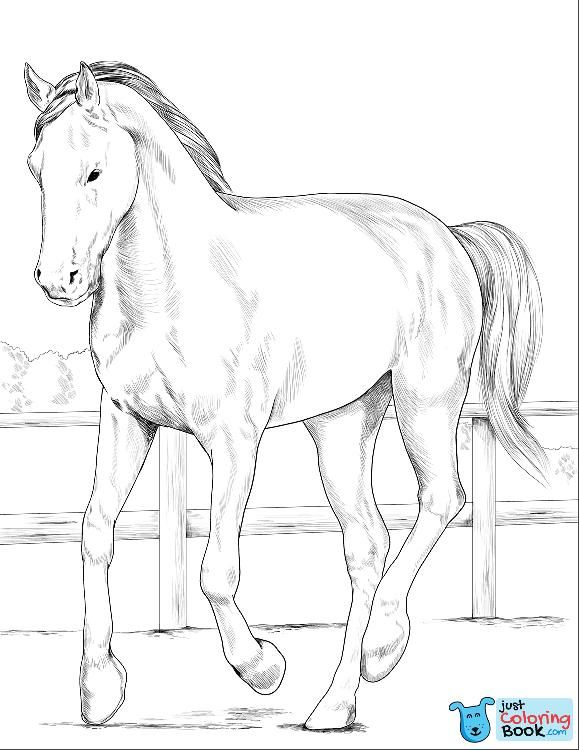 Westphalian Horse Coloring Page Free Printable Coloring Pages With Trakehner Horse Coloring Pages Horse Coloring Animal Coloring Pages Horse Coloring Pages