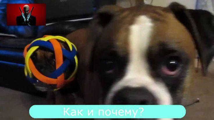Video Compilation October 2015 №3  Подборка Смешных Видео Октябрь 2015 №3