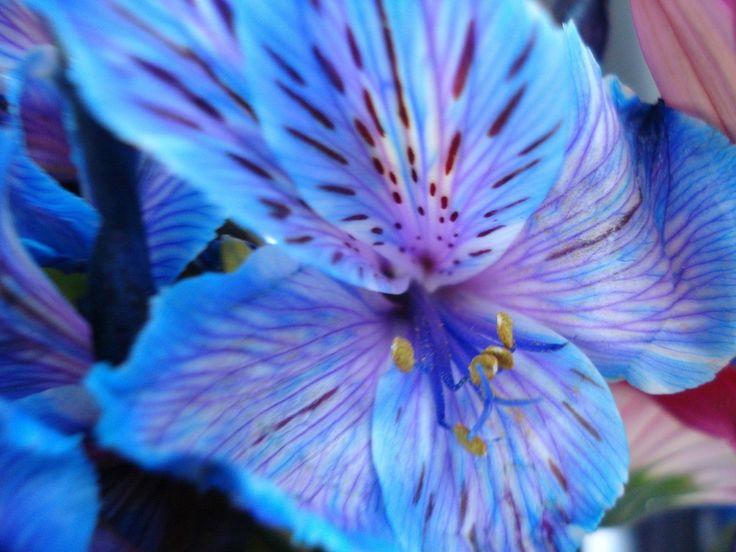 pretty flowers   again among nature's flowers: indigo night school survivor sanctuary