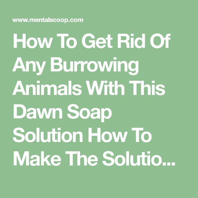a solution to get rid of The trick is to get rid of whatever's present with minimal effort then keep it from redeveloping with periodic retreatments before it get's established again doing this inexpensively is an added bonus.
