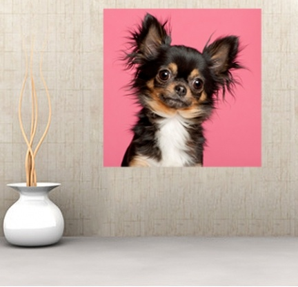 8 best grooming help images on pinterest pet care dog care and dcs15 cute chihuahua dog on pink background self adhesive wall mural solutioingenieria Images