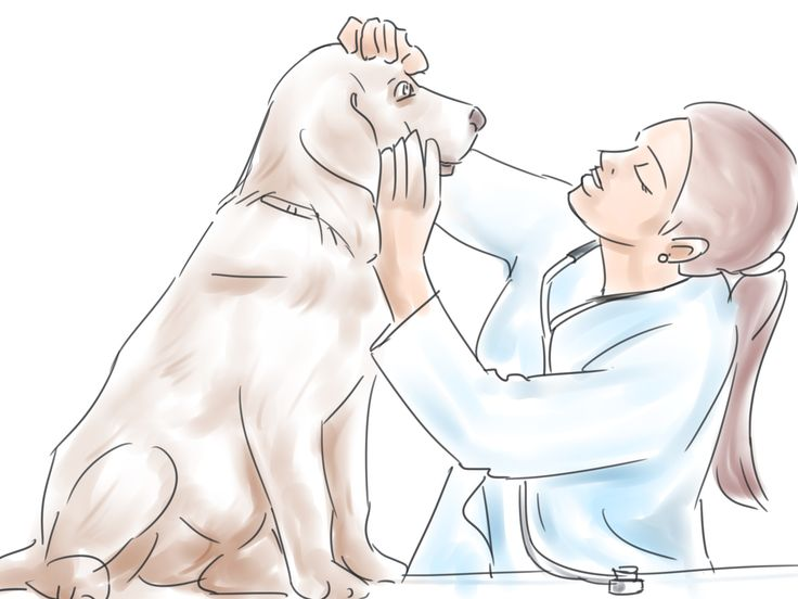 How to Train Your Service Dog Without a Professional Trainer -- via wikiHow.com