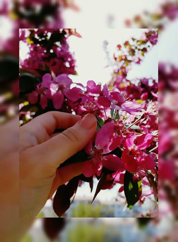 TURKEY-ANKARA  Fatih'te bahar kokan çiçekler