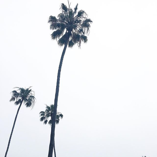 when the fog game is ⚡️ #lajollalocals #sandiegoconnection #sdlocals - posted by Anna Schuster  https://www.instagram.com/_annaschuster. See more post on La Jolla at http://LaJollaLocals.com