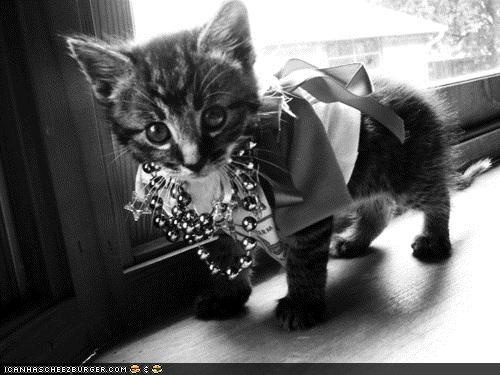 gussied up: Two, Kitty Cat, Cute Kitty, Pretty Kitty, Crazy Cat Lady, Funny Pet, Bling Bling, Animal, Baby Cat