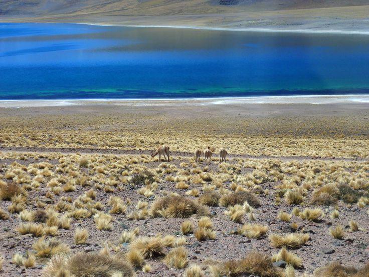 Laguna Miscanti San Pedro de Atacama Chile