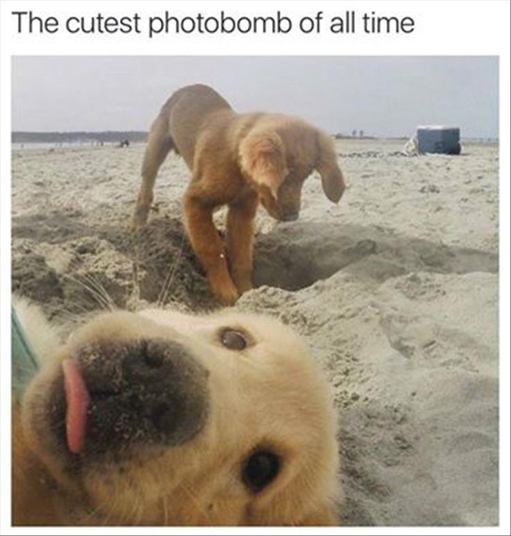 Puppy brother photo bomb