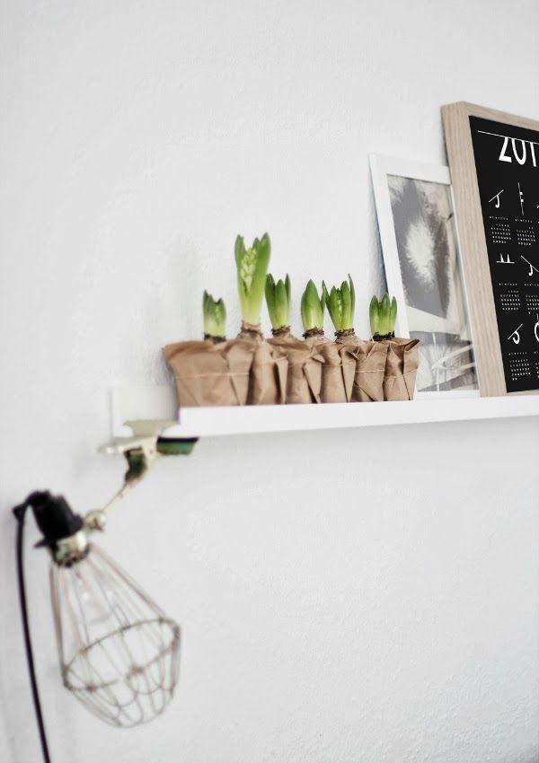 Hyacinth love photo Coco Lapine