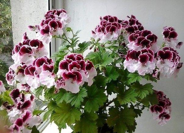 12 супер-эффективных способов удобрить домашние растения