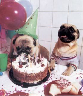 Puppy Birthday Party!  Love it!  A great time to Celebrate.