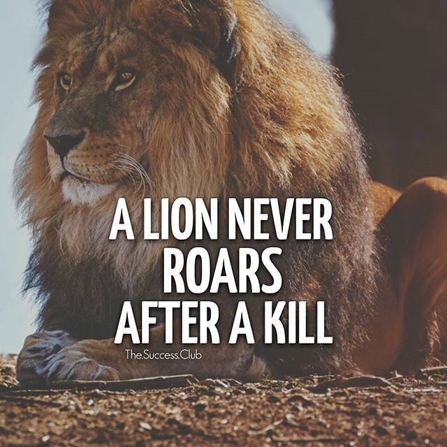 Success Later In Life Quotes: A Lion Never Roars After A Kill.