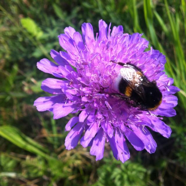 Her er billedet til historien om Blomsten og bien