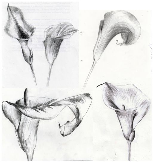 calla lily tattoo idea